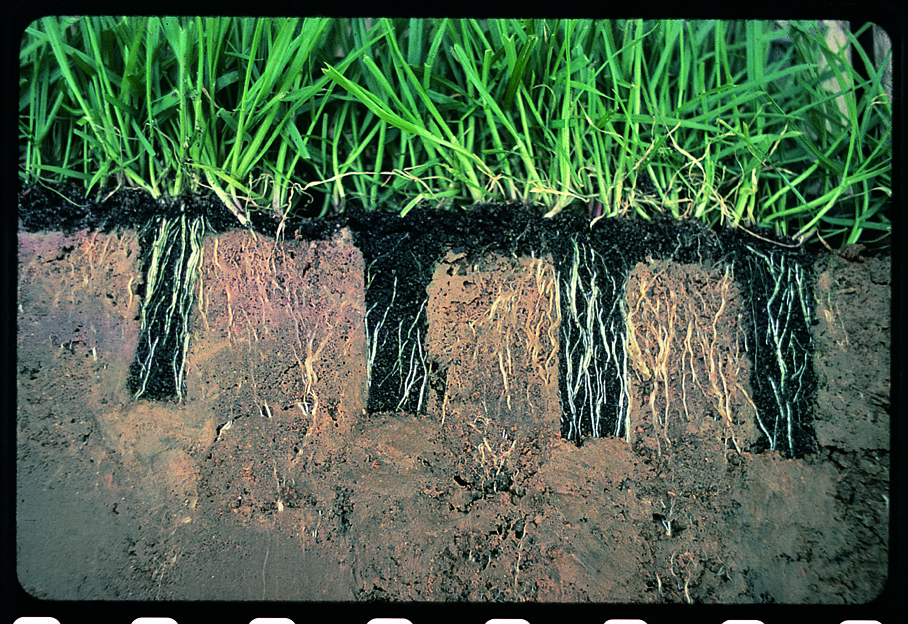 Root Results of Aeration & then Terraseeding